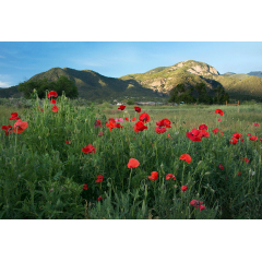 El Salto Poppy Field