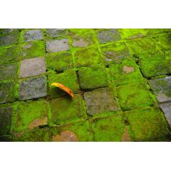 Moss Tiles